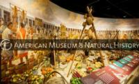 AMNH Opens OUR GLOBAL KITCHEN Exhibition, 11/17