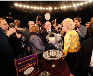 USA to Air 138th WESTMINSTER KENNEL CLUB DOG SHOW, 2/11