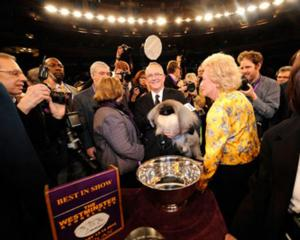 USA to Air 138th WESTMINSTER KENNEL CLUB DOG SHOW on 2/11