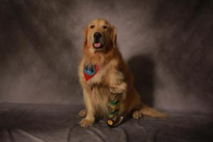 PBS's NATURE to Air 'My Bionic Pet', 4/9
