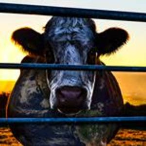 Investigative Documentary  COWSPIRACY: THE SUSTAINABILITY SECRET Makes Lansing Premiere