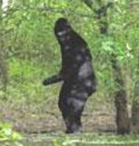 Spike TV to Offer $10 Million Prize to Prove Bigfoot Exists