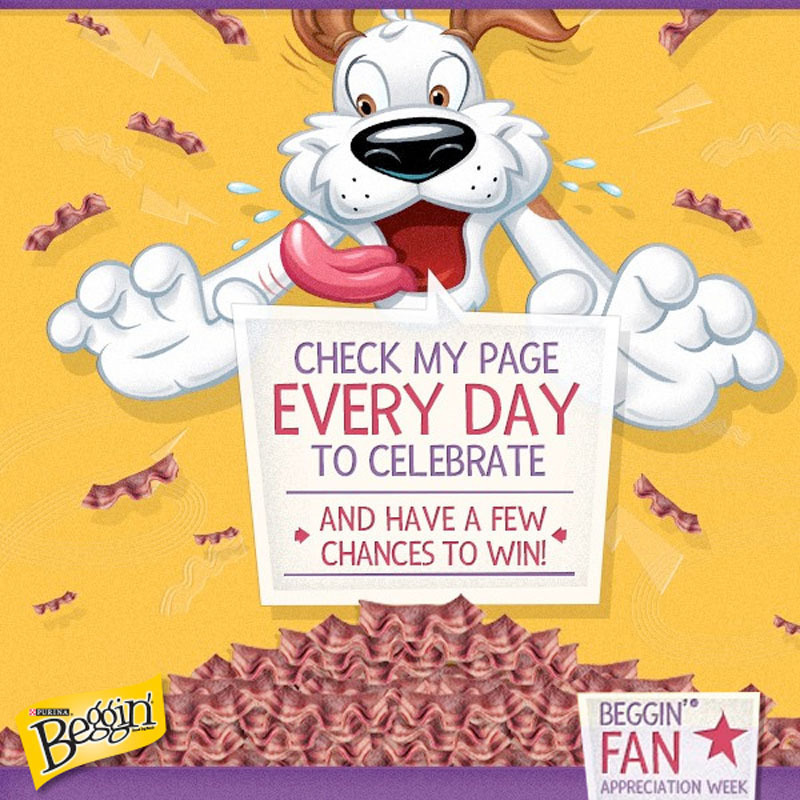 Nothing Like Bacon - Hamlet, Beggin's Mascot Celebrates One Million Bacon-Loving Facebook Fans With Week-Long Sweepstakes