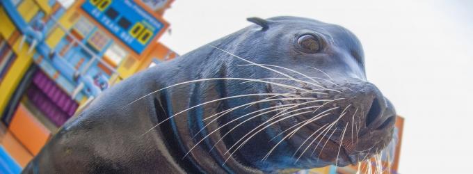 BWW Reviews: Heading Back to School with SeaWorld Orlando's SEA LION HIGH