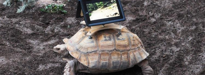 Online Petition Calls for Aspen Art Museum to Remove iPads From Tortoises