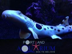 Portland Aquarium Presents Walking Sharks Exhibit