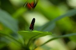 Meijer Gardens Opens 'Butterflies Are Blooming' Exhibition Today