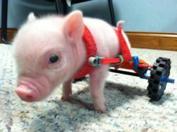 PIG ON WHEELS', Chris P. Bacon, Pens Children's Books