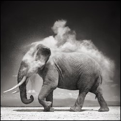 Nick Brandt African Wildlife Photography Show Opens in Jackson Hole Today
