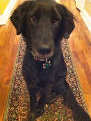 J.C. Caroline Releases GIGI THE FAMOUS RESCUE DOG