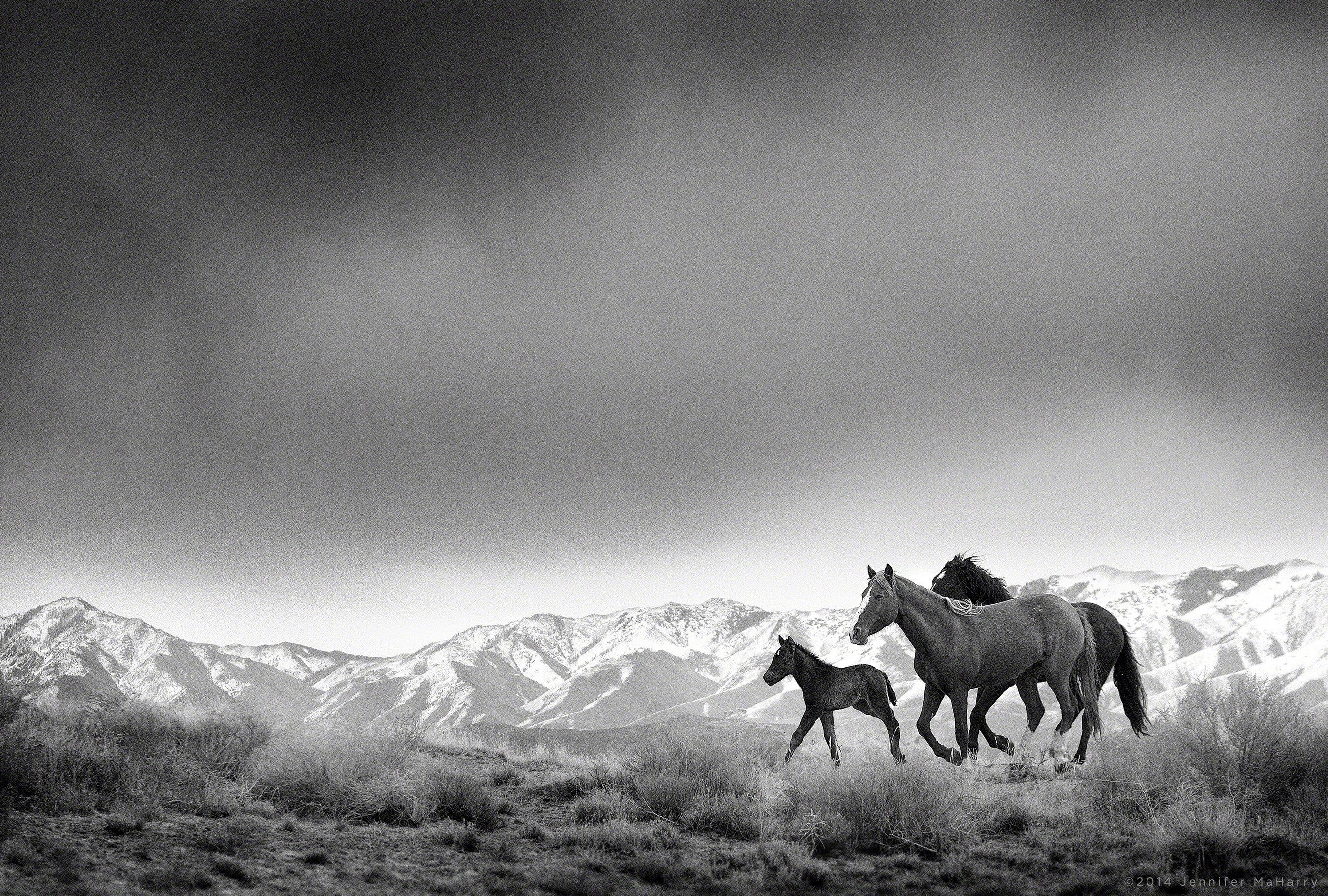 G2 Gallery Presents Wild Horses Exhibit, Thru 9/14