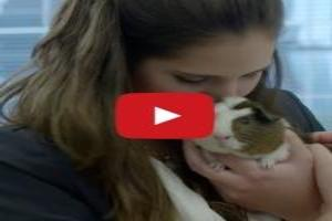 Exclusive video: 'Bring Your Pet to Work Day' Backfires at Klick Health