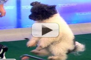 STAGE TUBE: AGT Winner 'Olate Dogs' Perform on TODAY