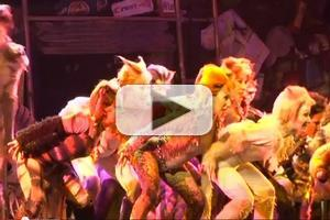 STAGE TUBE: Featured Interviews and Behind the Scenes of CATS at the Gateway in Bellport