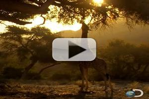 VIDEO: Sneak Peek - Discovery's New Series AFRICA