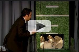 VIDEO: Puppies Predict Super Bowl Winner on JIMMY FALLON