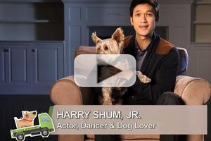 VIDEO: GLEE's Harry Shum, Jr. Featured on Latest Episode of Josh Duhamel's' RESCUE WAGGIN'