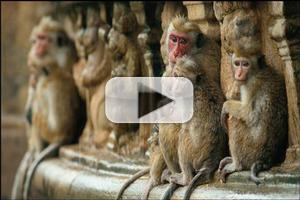 VIDEO: First Trailer for Disneynature's MONKEY KINGDOM