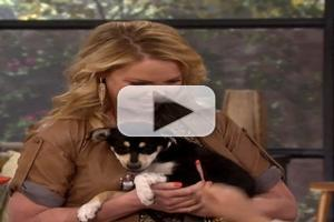 VIDEO: Katherine Heigl Talks Animal Advocacy on THE TALK