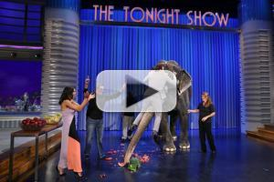 VIDEO: Jimmy Fallon Goes Eye-to-Eye with Full-Grown Elephant on TONIGHT SHOW