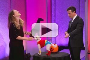 VIDEO: JIMMY KIMMEL LIVE Presents 2nd Annual Canine Costume Parade!