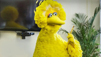 VIDEO: Big Bird Establishes 'Pecking Order' in All-New FUNNY OR DIE Video