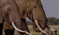 VIDEO: Netflix Unveils Trailer, Key Art for New Documentary THE IVORY GAME