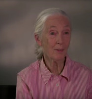 VIDEO: Netflix Shares THE IVORY GAME Featurette with Dr. Jane Goodall