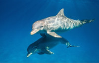 VIDEO: DisneyNature Shares First Look at DOLPHINS, In Theaters 2018
