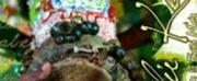 'Transmisi?n en la Erit? Meta' Is Sonic Journey Through Cuba's Past; Available Now Digitally