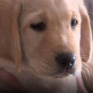 NBC's TODAY Welcomes Shows First Service-Dog-In-Training