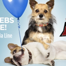 Kaley Cuoco to Host THE ALL-STAR DOG RESCUE CELEBRATION on FOX, 11/26