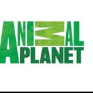 Animal Planet to Present WILD WINTER NIGHTS Holiday Programming Event