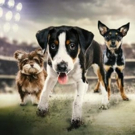 Cutest Sports Competition Returns! Animal Planet to Air PUPPY BOWL XIII, 2/5