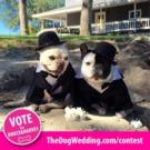 Dogs to Dress in Wedding Couture Tonight for Chance to Appear in THE DOG WEDDING Movie