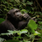 'The Thinker' Wins Natural Habitat Adventures' 2016 Wildlife Photo Contest