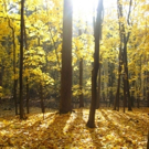 A WALK IN THE WOODS Highlights Nature Photography at bergenPAC