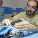 THIRTEEN's NATURE Presents 'Jungle Animal Hospital', 5/18