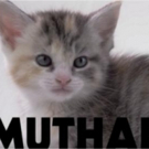 Beware Of Darkness Drop New Single 'Muthafucka' + Share Kitten Infused Video