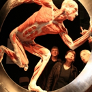 STAGE TUBE: Sneak Peek at BODY WORLDS VITAL Exhibition, Coming to Johannesburg, March 1