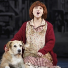 BWW Review: ANNIE at Shea's Buffalo Theatre