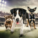 Animal Planet to Revisit Past MVP's on PUPPY BOWL: WHERE ARE THEY NOW?, 1/27