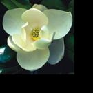 Atlanta Botanical Garden's Dr. Jennifer Cruse-Sanders Honored for Contributions to Plant Conservation
