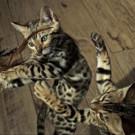 THIRTEEN's NATURE Uncovers Secret World of Pets Tonight