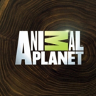 Animal Planet's PIT BULLS & PAROLEES Season Finale Breaks Records in Key Demos