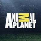 Animal Planet to Premiere New 6-Part Adventure Series PROJECT GRIZZLY, 11/12