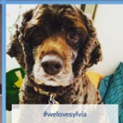PHOTO FLASH: Dog Owners at SYLVIA Promised a Paw-sitively Wonderful Surprise