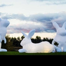 Australian Artist Amanda Parer Launches North American Tour of Public Art Installation of Illuminated Rabbits