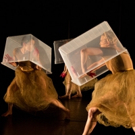 Cornish Playhouse to Welcome GISELLE DECONSTRUCT This Weekend