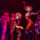 Review Roundup: CATS Returns to Broadway- All the Reviews!